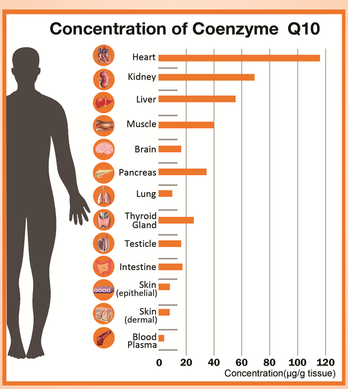 concentration-of-coenzyme-q10